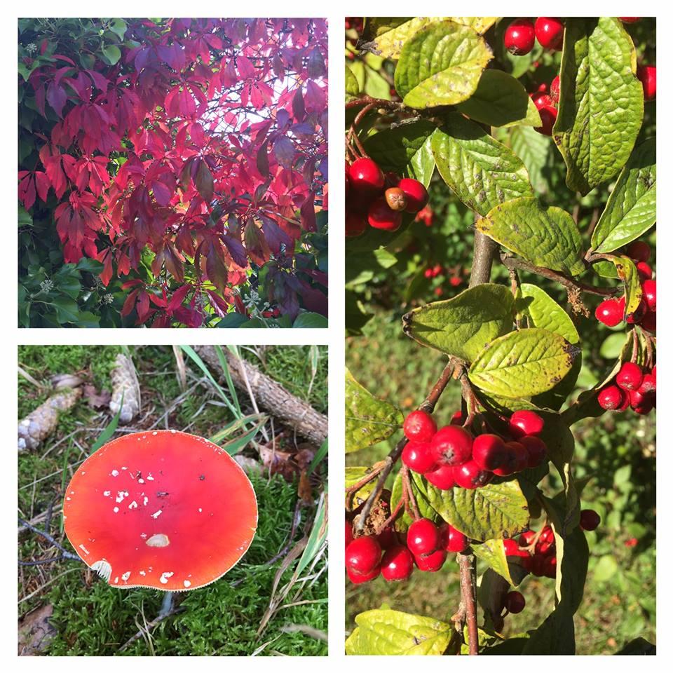 collage efterår